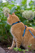 Cat Harnesses, Collars, Leashes & Grooming Supplies