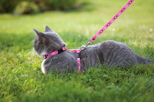 Cat Harnesses by Lupine