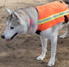 Outdoor Gear:  K9 Reflective Safety Vest