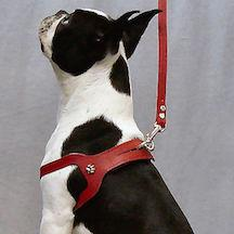 Choke Free Dog Harness for dogs under 20 lbs