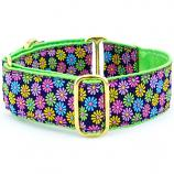 "Dog Collars:  Margaritas De Primavera 1.5"" Wide"